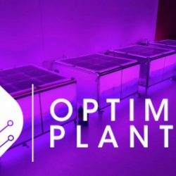 Optima Planta logo and bioincubator